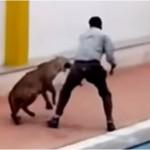 Leopardi futet në shkollë, plagos 6 persona (VIDEO)