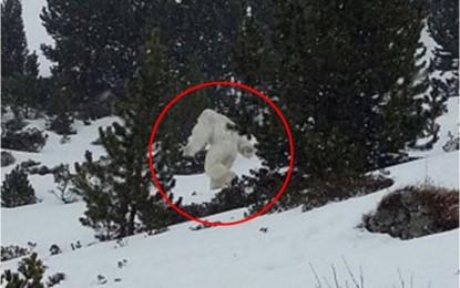 A është kjo prova që ekziston Yeti?