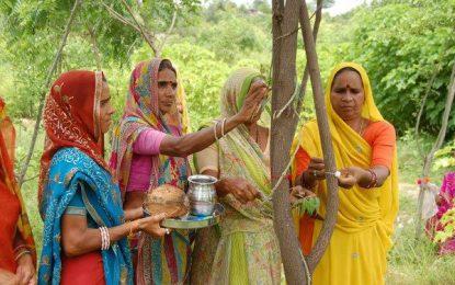 Një fshat mbjell 111 pemë për lindjen e 1 vajze