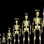 Burrat më të gjatë në botë gjenden në Hollandë, gratë në Lituani