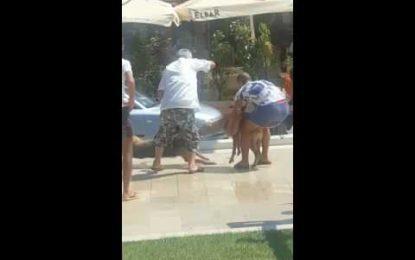 Pitbulli masakron qenin në Durrës (Pamje të rënda)