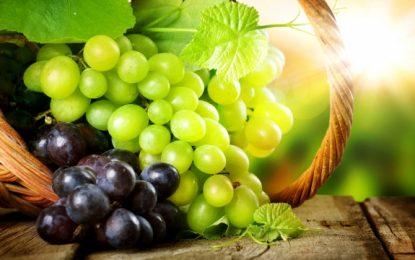 Terapia e verës