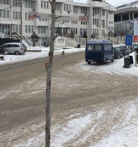 E pabesueshme: Në qytetin shqiptar zbret ujku!