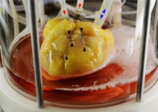 Shkencëtarët rikrijojnë zemrën që në qelizë