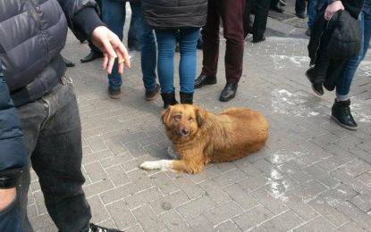 """FOTOLAJM/Protestuesi i veçantë """"kundër"""" qeverisë"""