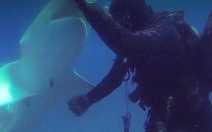 Momenti i pabesueshëm kur i riu ndihmon një peshkaqen