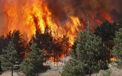 Bulqizë dhe Fier, zjarret bëhen të rrezikshëm