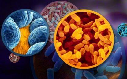 Këto janë superbakteret që kanë vënë në alarm mjekësinë