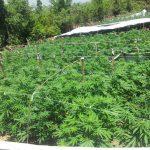 Raporti i Departamentit Amerikan i Shtetit: Nami në Shqipëri me drogë