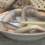 Një grua ha gjarpërinj për trajtimin e kancerit