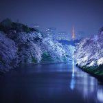 Japoni – Tokio ju fton të shijoni mrekullinë e pranverës