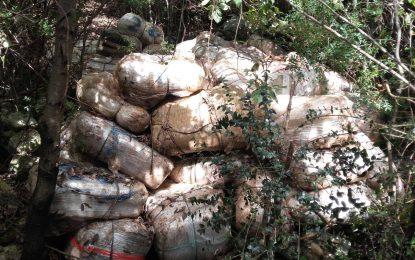 """Droga """"lum"""" në Vlorë, sekuestrohen 1 ton kanabis sativa (FOTO)"""