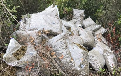 Berat/Sekuestrohen 1.5 ton kanabis