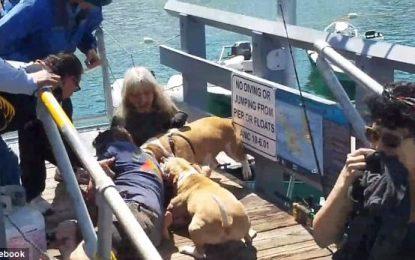 Pronari hero shpëton qenin nga sulmi i tmerrshëm