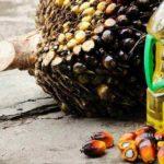 Parlamenti Evropian ndalon përdorimin e vajit të palmës deri në vitin 2020
