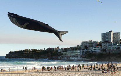 Apeli i Policisë: Ja si t'i mbroni fëmijët nga vetëvrasja prej 'Balenës Blu'