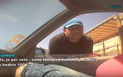 Skandal/ Kamera e fshehtë kap fermerët e Divjakës: Kastravecat e domatet me hormone