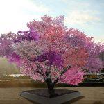 40 lloje të ndryshme frutash rriten në një pemë të vetme