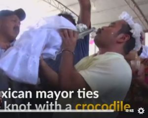 VIDEO/ Meksikë, burri martohet me një krokodil