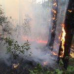 """Shqipëria në """"flakë"""". 90 vatra zjarri në gjithë vendin. Kërkohet ndërhyrja e NATO"""
