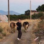 Modelja shqiptare ka miliona, por i pëlqen jeta e fshatit e lopët