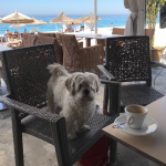 Klajda Gjosha kafe me Pupin!