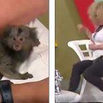 Majmuni kafshon modelen live në emision, shikoni reagimin e saj