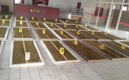 Operacion i madh në Kosovë: Zbulohen dyert e mbushura me 135 kg marihuanë, që po niseshin drejt Zvicrës