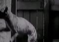 VIDEO/ Zbulohet kafsha e rrallë që po çmend shkencëtarët