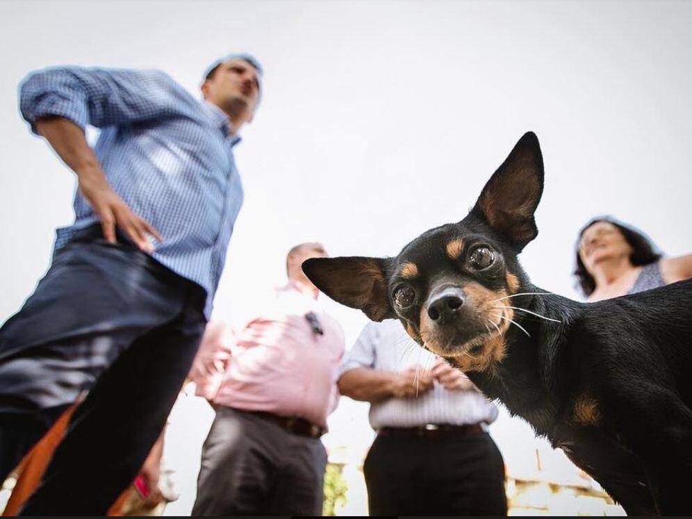Ligji për mbrojtjen e kafshëve, Veliaj firmos peticionin: Bashkë për banorët më specialë të qytetit