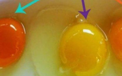 Si ta kuptoni nëse vezët vijnë nga një pulë e sëmurë